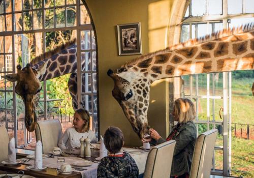 Különleges szállások: The Giraffe Manor, Kenya