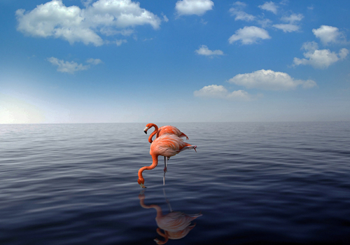 Tavaszi slágerlista: Aruba
