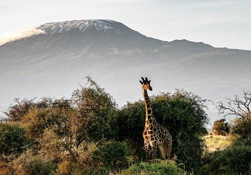 Barangolások Kenyában: Teleki Expedíció emlékutazás (1. rész)