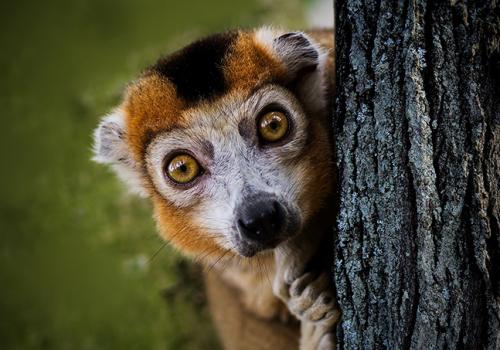 Afrikai utazások: Madagaszkár, a nyolcadik kontinens (1. rész)