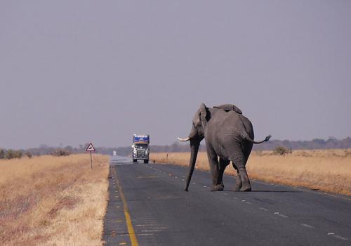 Álomszafari Afrikában: Namíbia, Botswana és Zimbabwe (1. rész)